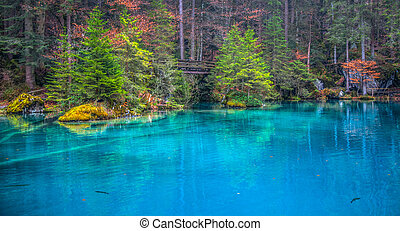 Blausee, Switzerland -Tree Trunks - Dead wood and tree...