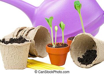 joven, plantas, listo, más grande, maceta