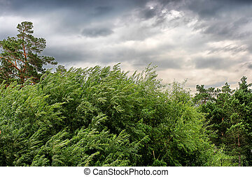 stormy weather - nature landscape with windy stormy weather