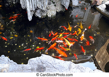 fish pond - small decorative fish pond in the yard of...