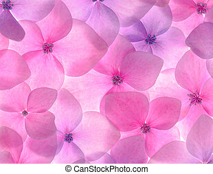 Pink flower background close up Romantic and love pattern