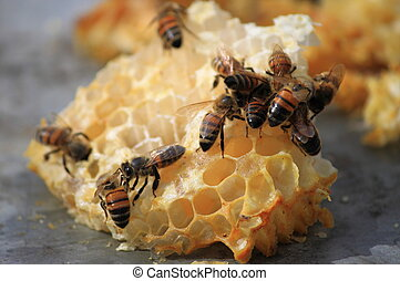 Bees working on honey cells - Close up view of bees working...