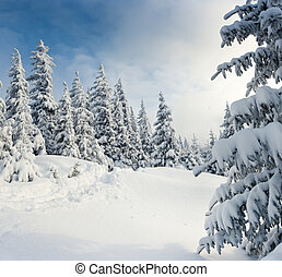 winter landscape - Trees covered with hoarfrost and snow in...