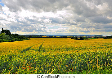 Beautiful landscape fields near Schloss Fasanarie in Fulda,...