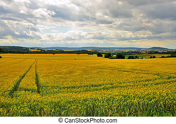 Beautiful landscape (fields) near Schloss Fasanarie in...