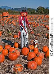 Scarecrow in Pumpkin Patch - This vertical autumn season...