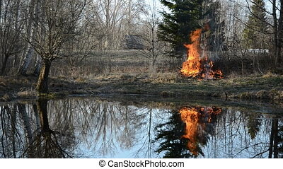 spring fire in garden near pond