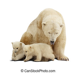 Polar bear with cubs. Isolated over white - Polar bear with...