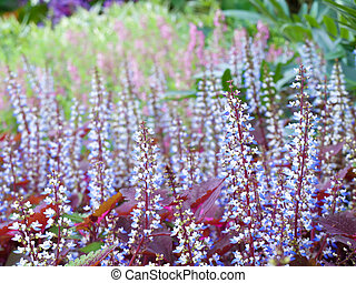 Colorful field of coleus flowers with shallow DoF(depth of...
