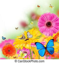 Blooming flowers - Gerber flowers with butterflies