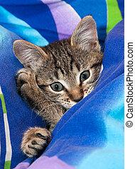 Sleepy kitten on blue soft bed