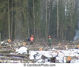 wood cutters work forest