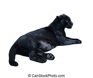 lying black panthera. Isolated over white - lying black...