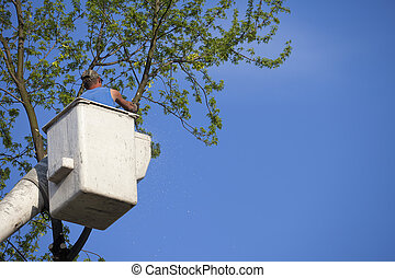 Tree Removal - Man in bucket truck saws tree for tree...