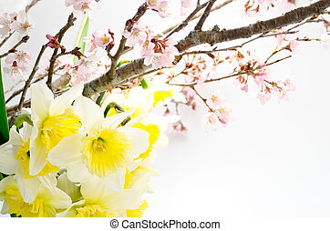 Cherry blossoms and narcissus - Cherry blossoms and yellow...