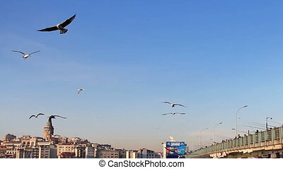Seagulls - Beautiful sea birds in Istanbul