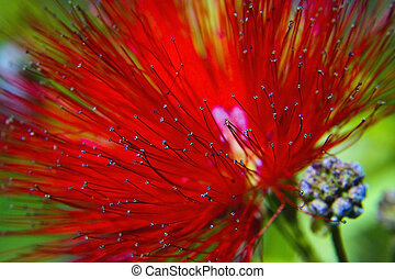 Red flower blossoming