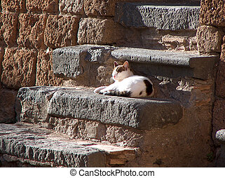 Cat sleeps in the sunshine. - A lazy cat sleeps in the...