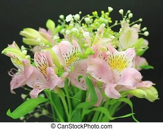 alstroemeria - I put alstroemeria in a vase and turned it...