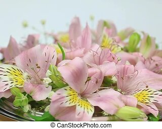 alstroemeria - I put alstroemeria in a tray and turned it...