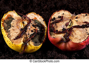 Rotten apples with worms lying on brown soil