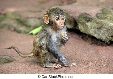 Portrait of the sad monkey. - The small wet monkey. Park of...