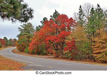 Autumn Drive - A winding road through an Autumn forest