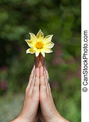 Hands holding a flower