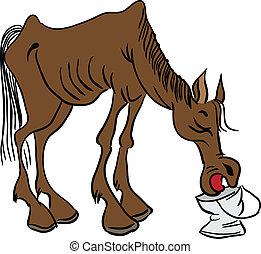 A lean horse - Skinny cowboy horse drinks water from a...