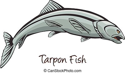 Tarpon, Color Illustration