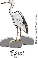 Egret, Color Illustration - Egret, Perched on a Rock, Color...