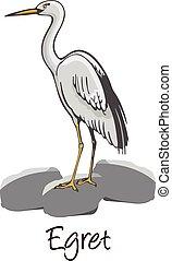 Egret, Color Illustration - Egret, Perched on a Rock, Color...