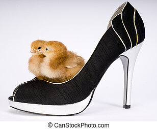 Two Chicks in a Shoe - A chick couple stands inside a pair...