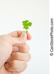 árvore, verde, mão