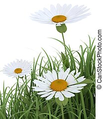 Spring Flowers in Grass isolated on white