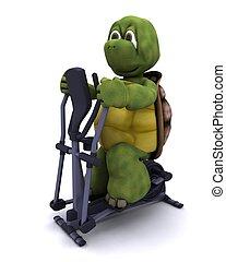 tortoise runnning on a cross trainer