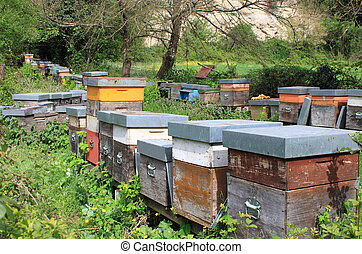 Apiary - A group of apiary boxes in the forest