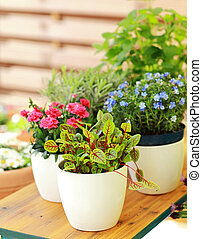 Flower pots - Outdoor flower pots for small garden, patio or...