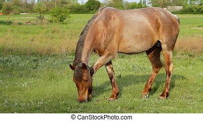 horse pasture - beautiful horse pasture grass