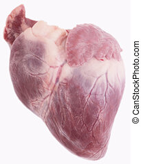pig heart - A pig heart on white background