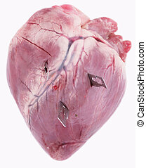 pig heart - A pig heart with three scalpels on white...