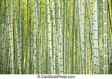 Bamboo trees background - Natural bamboo trees as perfect...