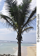 A palm tree at the beach