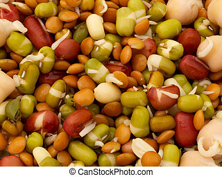 Sprouted Beans - Mixed sprouted beans