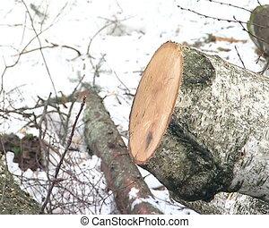 closeup cut forest site