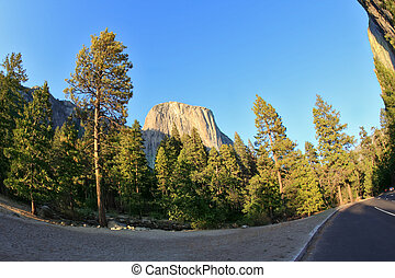 Abrupt turn of a highway, a pine and a rock - Picturesque...