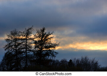 Silhouette of trees on colorful evening sky