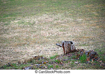 Tree stump on field with grass