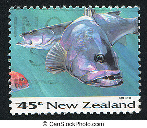 Grouper - NEW ZEALAND - CIRCA 1993: stamp printed by New...