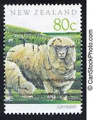 Corriedale sheep - NEW ZEALAND - CIRCA 1991: stamp printed...